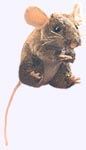 4 in. Mouse Finger Puppet